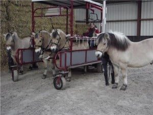 De vier paarden (Foto: R. Buist)