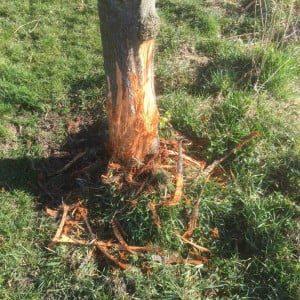 Schade aan bomen