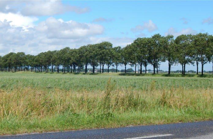 Waarschijnlijk kan een groot deel van de bomen langs provinciale wegen gewoon blijven staan. (Foto: Arie Pieters/'Fraxinus Excelsior'©)